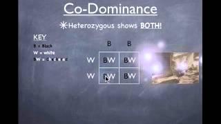 Genetics - Co-dominance