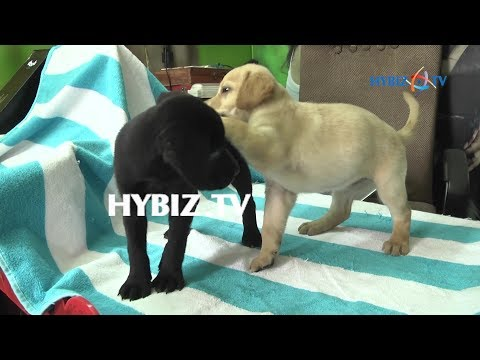 Pets Shop (Pet Point) At Narayanaguda In Hyderabad  | Hybiz