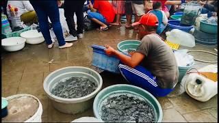 Download Video Suasana Pasar Jatinegara Kekinian MP3 3GP MP4