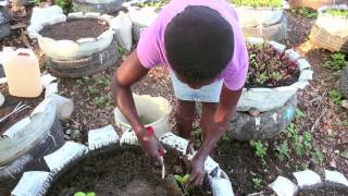 To tackle rising food insecurity in the wake of last year's hurricanes and drought, several UN agencies, together with local charity...