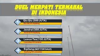 Video MERINDING Duel Merpati Termahal di Indonesia MP3, 3GP, MP4, WEBM, AVI, FLV Januari 2019