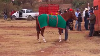 Carreras de caballos El Tepetate