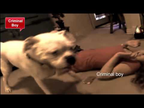 Download Dog action by girl of sex! HD Mp4 3GP Video and MP3