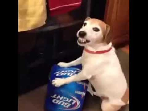 LOL Video – Don't Touch My Beer (Funny Dog)