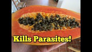 Foods that Kill Parasites - Papaya Seeds