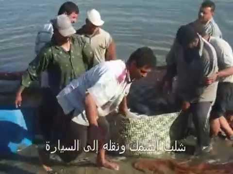 Farming of meagre (Argyrosomus regius) in Egypt