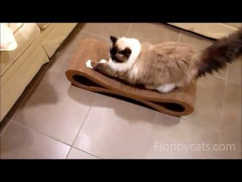 0 Karma Products Infinity Cat Scratcher Review