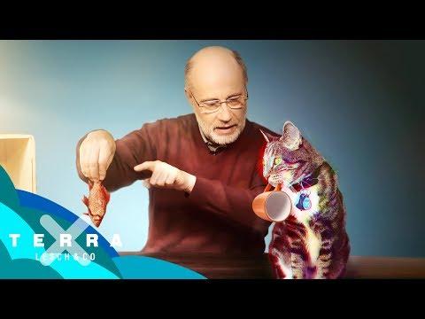 Schrödingers Katze – Tot oder lebendig?