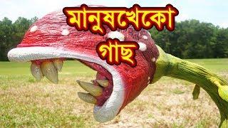Download Video যে গাছ মানুষ  খেতে পারে !! 👺manush kheko gach👺 MP3 3GP MP4