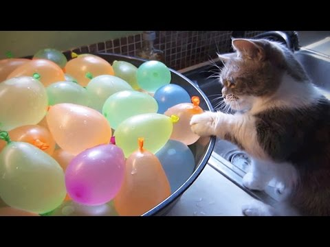 Cats VS Balloons 😂🎈 Funny Cats Playing With Balloons [Funny Pets] (видео)