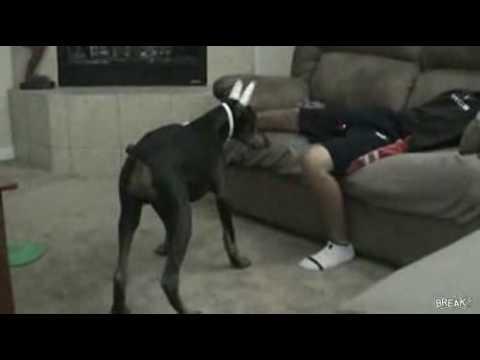 [動画 犬]レーザーポインタの光を追いかけた先には・・・