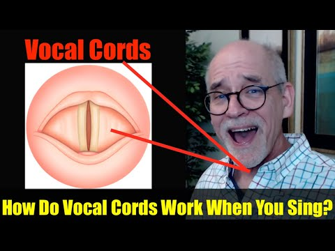 How Do Vocal Cords Work When You Sing?