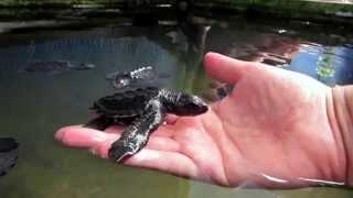 Habaraduwa Sri Lanka  city photo : Turtle Hatchery in Matara Rd, Habaraduwa, Sri Lanka