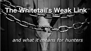 The Whitetail's Weak Link - and what it means for hunters