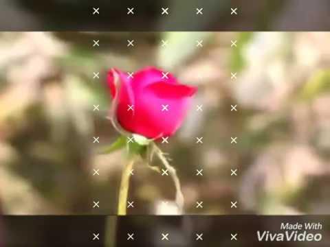 Video Bewafa darling Nagpuri song download in MP3, 3GP, MP4, WEBM, AVI, FLV January 2017