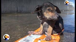 Uratowali psa umierającego na wysypisku śmieci. Teraz ma nową, kochającą rodzinę!