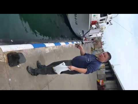 tunczyk-zjada-mewe
