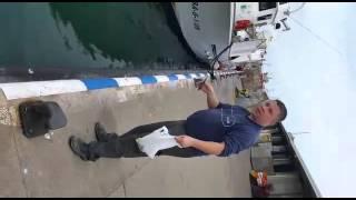 Chciał nakarmić rybką wielkiego tuńczyka gdy nadleciała mewa! Reakcja ryby zaskoczyła wszystkich!