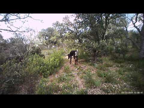 Video Demo Trail camera Ltl Acorn 5310 Wide Lense