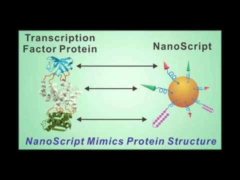 NanoScript - A Bio-Inspired Platfrom for Stem Cell Differentiation