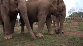 Elephant Love And Pumpkins