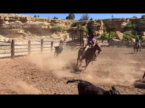 Convoyage de chevaux au Montana