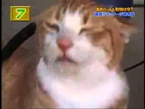 貓咪愛上電動按摩棒%252E%252E%252E全速震動!