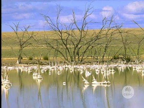Soil salinity in Australia (2001)