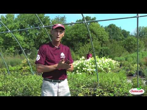 Gardening Tip: How-to grow trees and shrubs from cuttings and seedlings