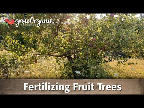 Fertilizing Fruit Trees