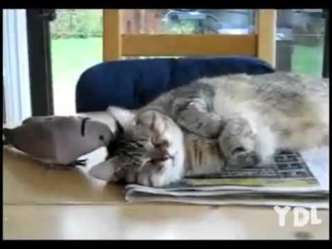 就是不讓你睡,吵死你給我清醒!