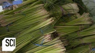 Lemongrass Oil | How It's Made