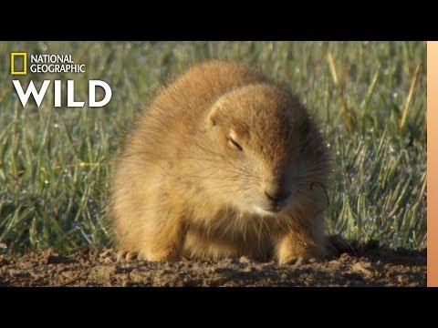 Which Animals Hibernate?   Animal Autofill