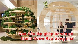 Quả Cầu lắp ghép từ ván gỗ thành Vườn Rau trong nhàvườn rau, quả cầu vườn rau, vườn rau bằng quả cầu, làm quả cầu rautheo vnexpress.net