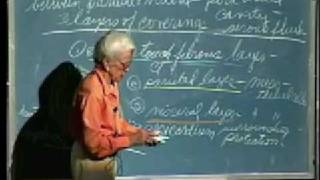Integrative Biology 131 - Lecture 14:  Hematology,...
