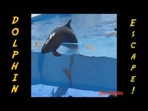 Dolphin Escapes From Aquarium 😮Commentary & Vid😮  ( David Spates )