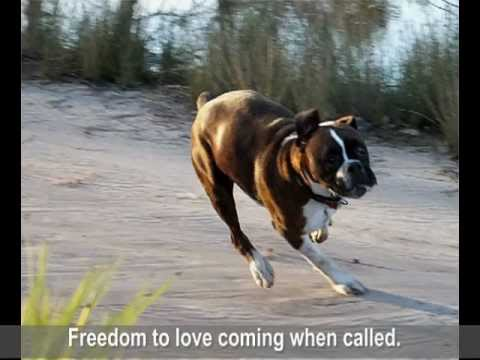 Susan Garrett's Recallers 4 – Freedom for Dogs – Freedom for You