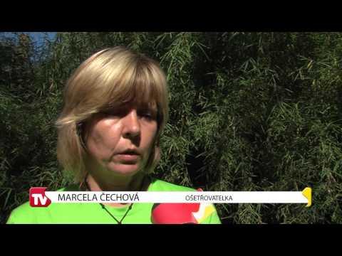 TVS: Zlínský kraj 30. 8. 2016