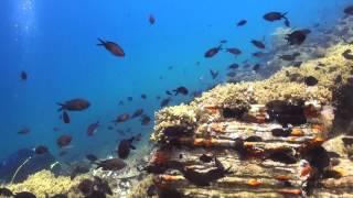Kalogria beach, scuba diving in Halkidiki