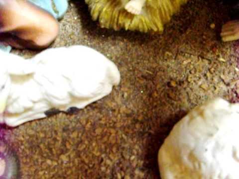 Escarchas de la Rosa Mística en Un Pesebre 06-01-2011