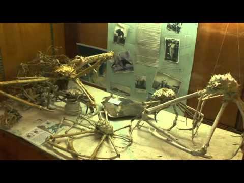 Orange Beach Indian & Sea Museum