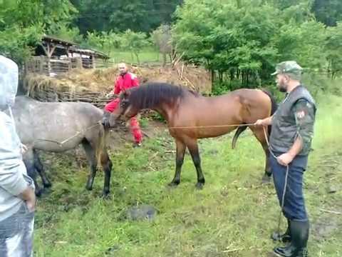 Sex konja i kobile