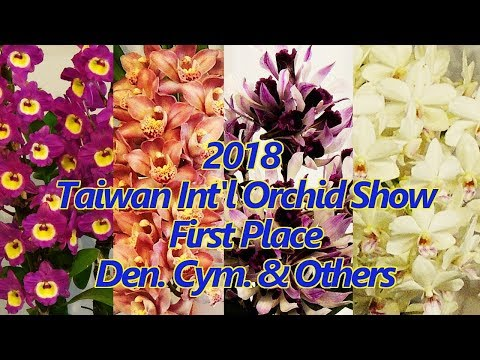 2018 Taiwan International Orchid Show (TIOS)-Den. Cym. & Others- First Place