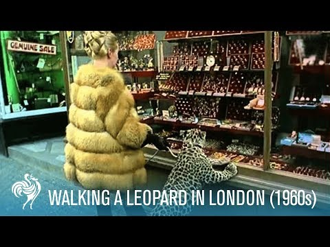 Michael the pet leopard
