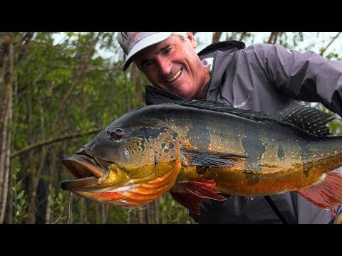 Amazon Peacock Bass - Jungle Fly Fishing By Todd Moen