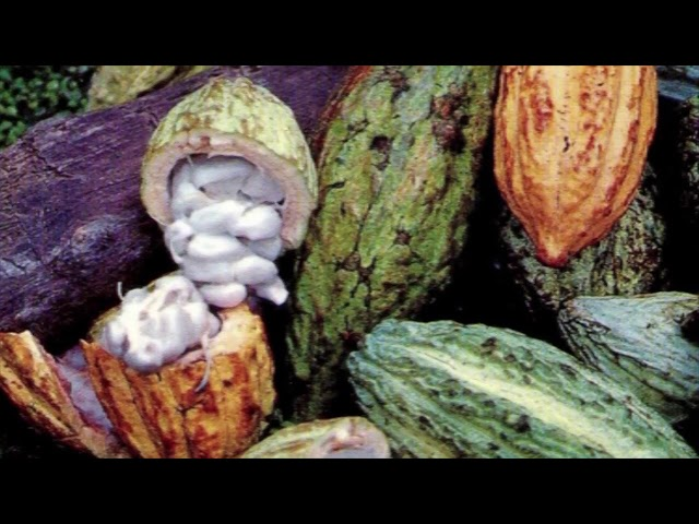Los mayas asociaron al cacao con el inframundo
