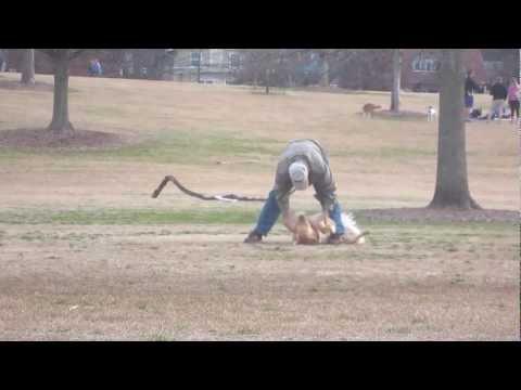 耍賴的毛小孩在公園玩High到死也不要離開,路人拍下的過程讓大家都被萌笑到肚子痛啊!