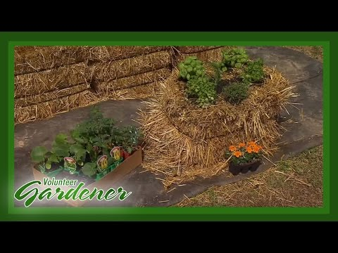 gardening - On this episode, we'll show you a way to have home-grown vegetables and herbs despite a lack of good soil or garden space. Straw bale gardening is simply con...