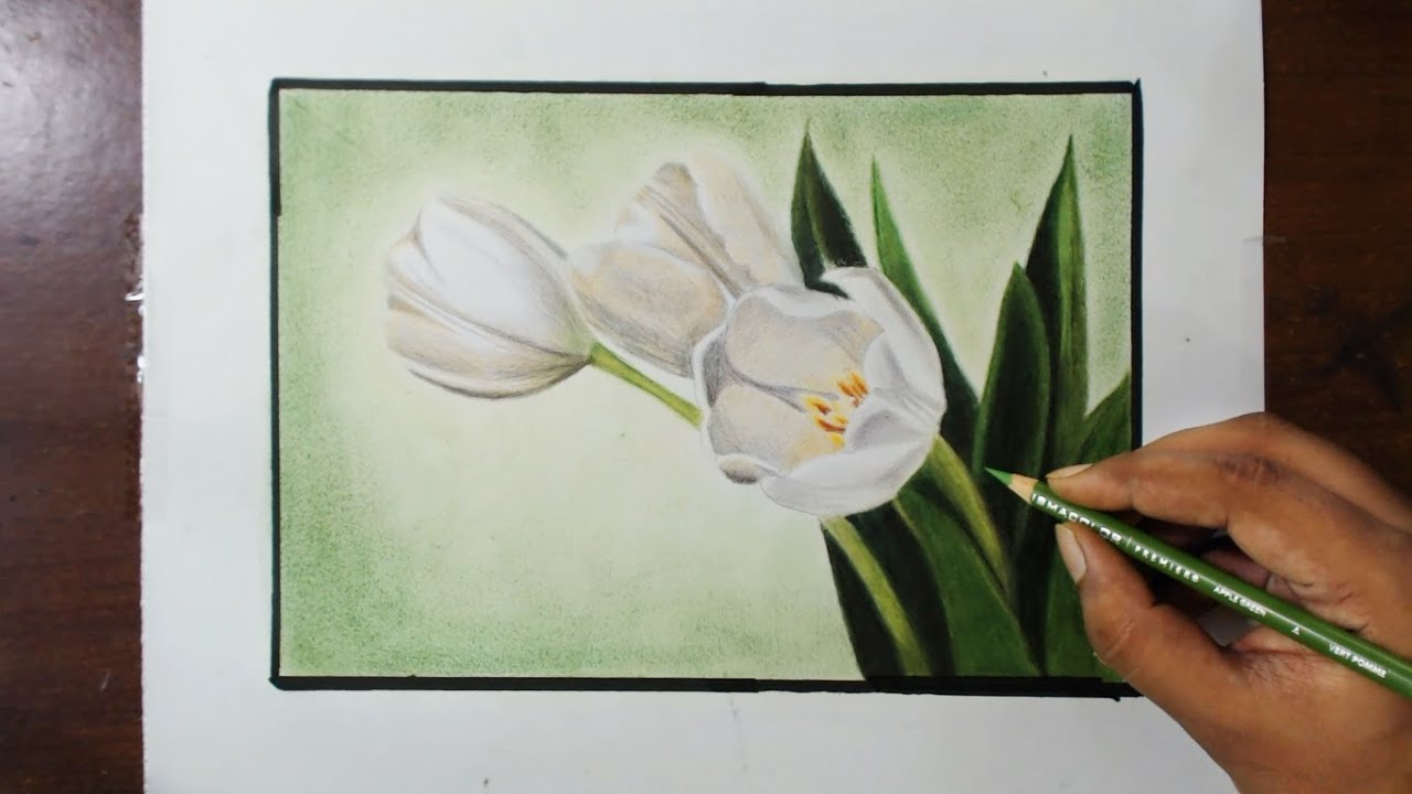 White Tulips Flower drawing by fadil