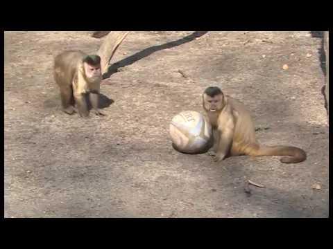 Schwerin: Zoo Schwerin - Überraschungseier für Zoo-Ti ...